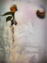the flowers which I gave ...
