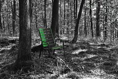 Ein Stühlchen steht im Walde ... A little chair stands in the forest ...