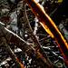 Le soleil couchant enflamme le bois mort [ON EXPLORE]