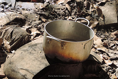 the old pot