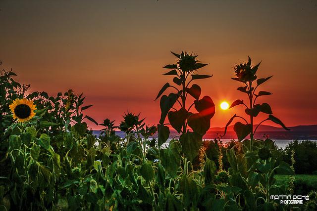 Le soleil nous dit aurevoir