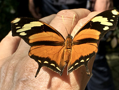 Mein Begleiter im Schmetterlingshaus :)
