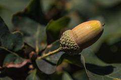Auch ein Herbstbote (PiP)