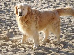un bon bain de soleil après le sable c'est cool