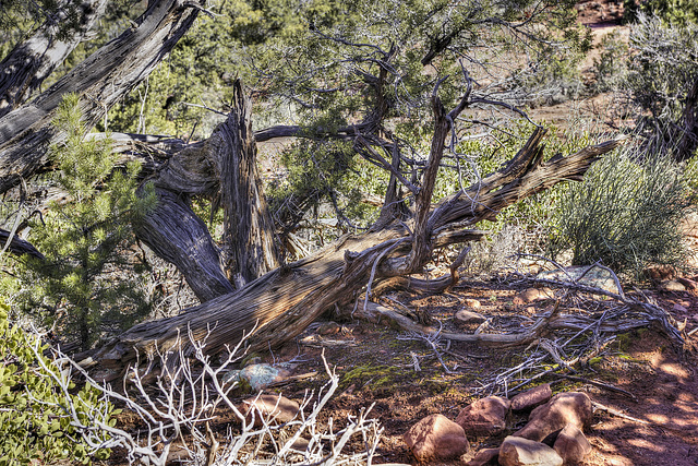 Fire Wood – Courthouse Butte Trail, Sedona, Arizona
