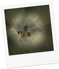 Frühlingsrausch-Kröte