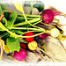 Rainbow Radishes. ...., home grown !!