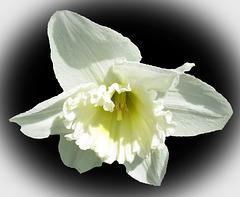 """Beautiful White"" (Explored)"