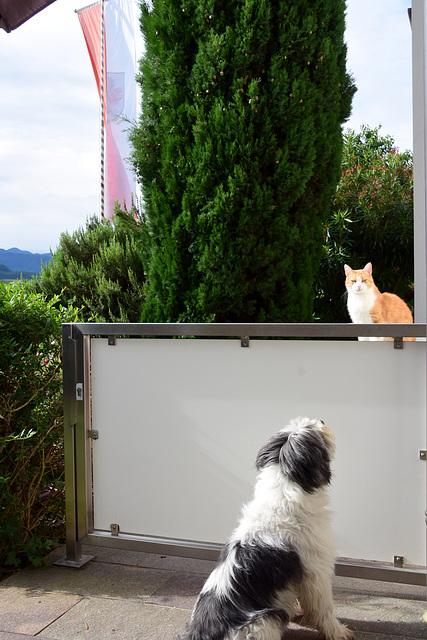 Lena und Katze
