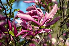 Frühlingserinnerung (PiP, bitte klicken)