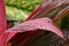 IMGL9031. Gouttes de pluie