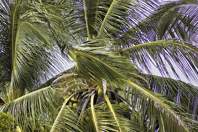 Best Fronds for Life – Jungle Crocodile Safari, Tárcoles, Puntarenas Province, Costa Rica