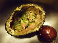 Winner, ugly avocado contest