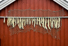 Nesland - dried cod