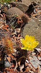 Cactus at the lakeshore.