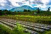 Landscape nearby Gunung Batukaru