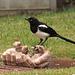 IMG 7683 Wildlife dpp