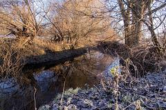Winterliche Oker bei Veltenhof (PiP)