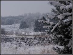 Start Snowing