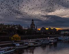 Die Vögel - The Birds (030°)