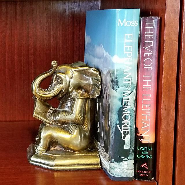 Elephant readings (Explored)