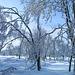 Winterzeit im Hohen Venn