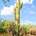 Saguaro Cactus, Boulders Arizona, Topaz Filter Impressionistic Van Gogh II - 052615