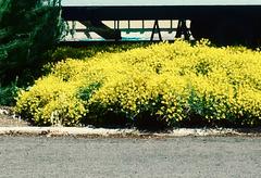 So yellow...
