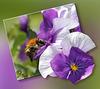 La visite de l'abeille ~