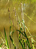Sedge and sun