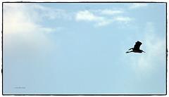 Fly - fly ... pensieri