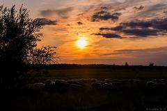 abends bei Liminka (© Buelipix)