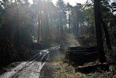 Der Wald dampft - Steaming forest