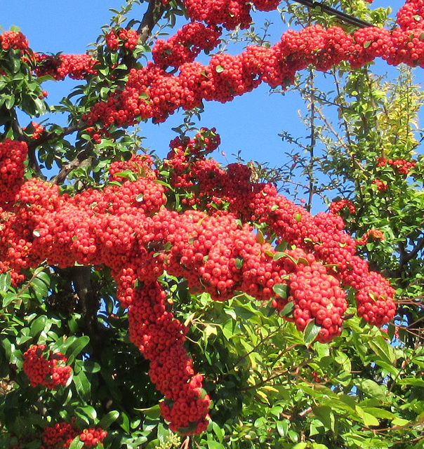 UNE TOUCHE DE ROUGE/ A TOUCH OF RED