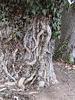 Wurzelwerk am Baum