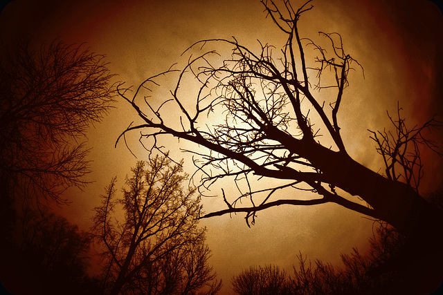 Tree Silhouettes, November