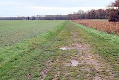 Chemin de Bréau - 6273