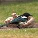 IMG 7536 Wildlife dpp