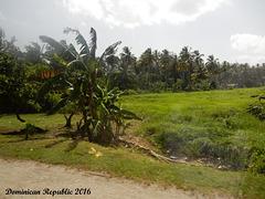 65 Tropical Farmland