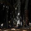 Licht im Urwald