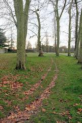 Chemin de la grille d'entrée du Château - 6287