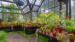 Conservatory, Botanic Gardens, Glasgow