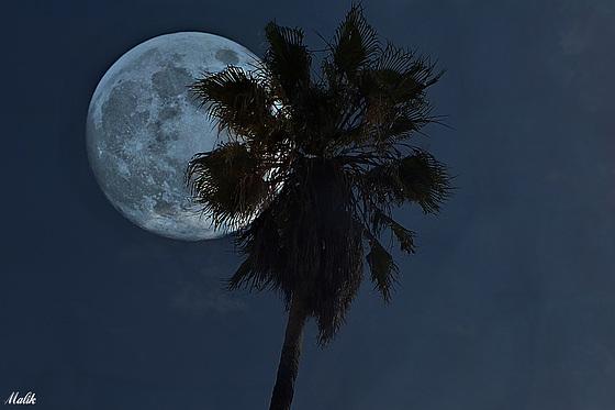 """Super """"Pleine-lune"""" ."""