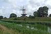 Nederland - Veere, De Koe