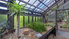 Cacti House, Botanic Gardens, Glasgow