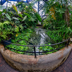 Tropical Pond, Botanic Gardens, Glasgow