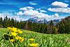 H.A.N.W.E - in Spring Meadows (see PiP)