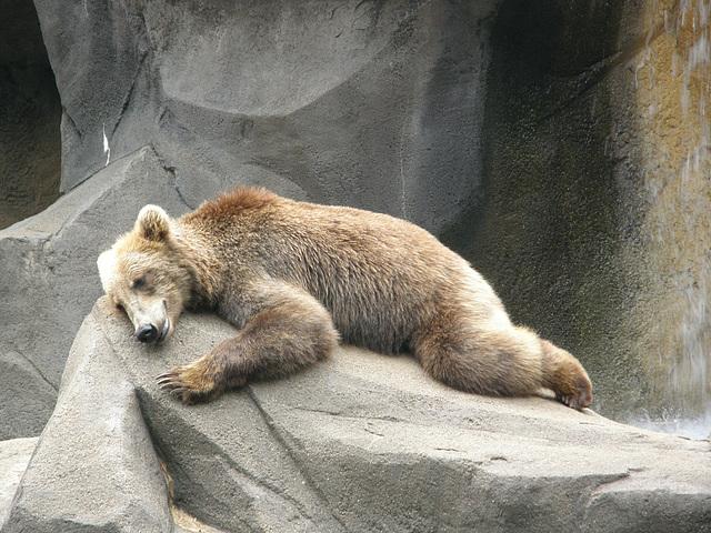 Sadder than the Average Bear