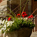 A Planter at the Old Courthouse