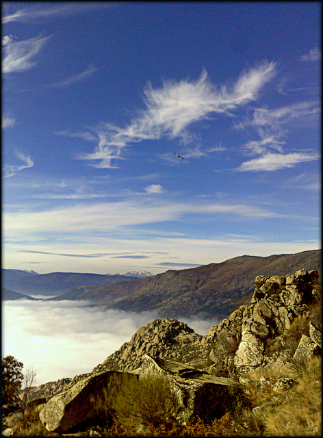 Sierra de La Cabrera, vulture and foggy valley